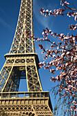 Parc du Champs de Mars blossoms by the Eiffel Tower, Paris, France
