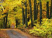 Autumn colors. New England, USA (Nov. 2007)