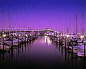 westhaven marina and harbour bridge auck land new zealand