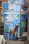 The blue village Jodhpur. Rajasthan. India