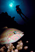 Diving, Red Sea