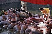 Nepal. Budhanilkantha, Lying Vishnu