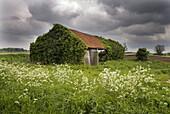 Ruined Barn. Fields. Norfolk. UK.
