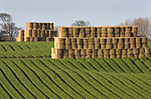 Autumn, Bales, Color, Colour, Farming, Food, Grower, Hill, Patterns, Rows, Straw, C67-672327, agefotostock