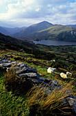 View from Healy Pass, Beara peninsula, County Kerry, Ireland, Europe