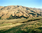 Grassland of Rowendale Homestead in the sunlight, Okains Bay, Banks Peninsula, South Island, New Zealand