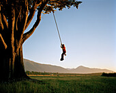 Girl on swinging rope at a giant tree at sunset, West coast, South Island, New Zealand