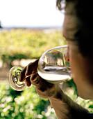 Wine tasting, a man drinking from a wine glass, Black Barn Vineyards, Havelock North, Hawke`s Bay, North Island, New Zealand