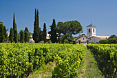 Vineyard in front of the houses of the village Suze-la-Rousse, Drome. Provence, France