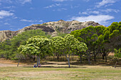 Vegetation at Diamond Head Volcanic Crater, Oahu, Pacific Ocean, Hawaii, USA