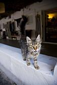 Cat in Panarea, Aeolian Islands. Sicily, Italy