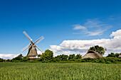 Windmill, Oldsum, Föhr Island, North Frisian Islands, Schleswig-Holstein, Germany