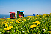 Beach Chairs and Flowers on a Dyke, Pellworm Island, North Frisian Islands, Schleswig-Holstein, Germany