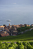 View over vineyards and Rivaz to lake Geneva, Lavaux, Canton of Vaud, Switzerland