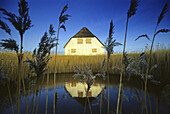 House on a pond with common reed, Langeneß holm, North Friesland, Schleswig-Holstein, Germany