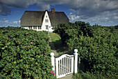 House with thatched roof behind green hedge with gate, Morsum, Sylt island, North Friesland, Schleswig-Holstein, Germany