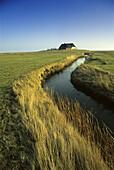 House on dwelling mound under blue sky, Langeneß holm, North Friesland, Schleswig-Holstein, Germany