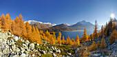 Lake Sils in autumn, Piz Corvatsch and Piz da la Margna, Upper Engadin, Engadin, Grisons, Switzerland