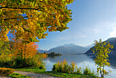 Trees in autumn colours at lake Zeller See, Zell am See, Salzburg, Austria