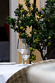 Glasses on a table and a lemon tree, Restaurant Villino, Lindau, Lake Constance, Germany