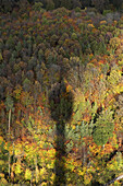 Shadow of television tower on autumn forest, Stuttgart, Baden-Wurttemberg, Germany