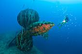 Diver at Propeller of HIJMS Nagato Battleship, Marshall Islands, Bikini Atoll, Micronesia, Pacific Ocean