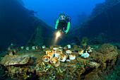 Diver discover Tableware and Artifacts on USS Saratoga, Marshall Islands, Bikini Atoll, Micronesia, Pacific Ocean