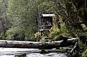 Platform by river for bear watching in rainforest. Princess Royal Island, British Columbia, Canada