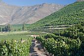 Don maximiano estate Viña errazuriz winery Aconcagua valley Chile