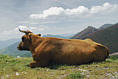 Agriculture, Animal, Animals, back view, Cantabrian Mountains, Cattle, Color, Colour, Country, Countryside, Cow, Cows, Daytime, Europe, exterior, Farm animals, Farming, Herd, Herds, Horizontal, Livestock, Lying down, Mountain, Mountains, nature, outdoor,