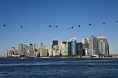 Birds over Skyline, Manhattan, New York City, New York, USA