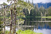 Trees standing at the shore of remote Crane Lake, Tongass National Forest, Mitkof Island, Southeast-Alaska, USA