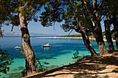 View through pines at a sunlit bay, Golden Horn, Bol, Brac Island, Dalmatia, Croatia, Europe
