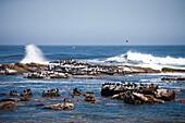 Cormorants on rocks at Cape of Good Hope, Cape Peninsula, Western Cape, South Africa