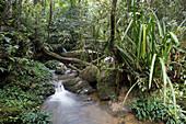 Rainforest and stream in Kinabalu Park, Kota Kinabalu, Sabah, Borneo, Malaysia, Asia