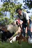 Rooster and chicken, farmer in background, biological dynamic (bio-dynamic) farming, Demeter, Lower Saxony, Germany