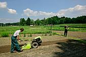Farmer using rotary tiller, biological dynamic (bio-dynamic) farming, Demeter, Lower Saxony, Germany