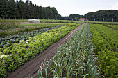 Several vegetable patches, biological dynamic (bio-dynamic) farming, Demeter, Lower Saxony, Germany