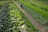 Farmer between vegetable patches, biological dynamic (bio-dynamic) farming, Demeter, Lower Saxony, Germany