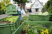 Farmer sorting boxes with fresh vegetabel, biological dynamic (bio-dynamic) farming, Demeter, Lower Saxony, Germany