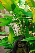 Pflanzen und Steinfigur im Garten des Mimpi Resort, Menjangan, West Bali Nationalpark, Indonesien, Asien