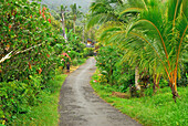 village street near Pekutatan close to National Park Bali Barat, Bali, Indonesia, Asia