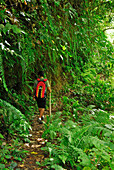 A man hiking through remote mountain scenery, North Bali, Indonesia, Asia