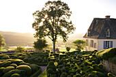 Les Jardins de Marqueyssac at sunset, near Beynac, The wy of St. James, Road to Santiago, Chemins de Saint-Jacques, Via Lemovicensis, Beynac, Dept. Dordogne, Région Aquitaine, France, Europe