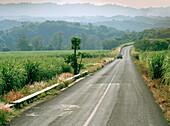 Car on a country road next to sugarcane fields, Veracruz province, Mexico, America