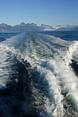 Waves created by fjord and wildlife tour in Seward Alaska AK U S United States Kenai Peninsula Resurrection Bay boat charter tour tourism excursion trip vacation