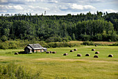 Farm Farmland along Highway 16 near Smithers British Columbia BC Canada barn weathered field crop hay harvest