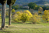 Tuscan landscape, farm, cypresses (Cupressus sempervirens), meadows and fields, deciduous forest, colours of autumn, Tuscany, Italy
