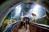 People visiting Aquarium, Westerland, Sylt Island, Schleswig-Holstein, Germany