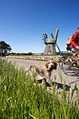 Cyclists with dog, windmill in backgorund, Nebel, Amrum island, North Frisian Islands, Schleswig-Holstein, Germany